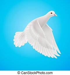 White dove - Flying white dove on blue sky background....