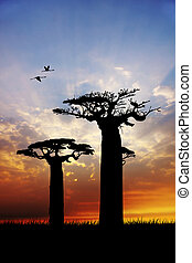 baobab plants at sunset - illustration of baobab plants at...