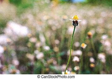 flower grass - alone flower grass in meadow