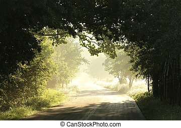 Country road at dawn