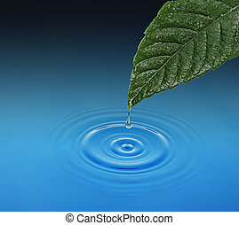 Green leaf with water drop falling.