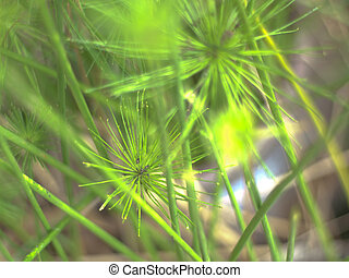 blur waterplant background