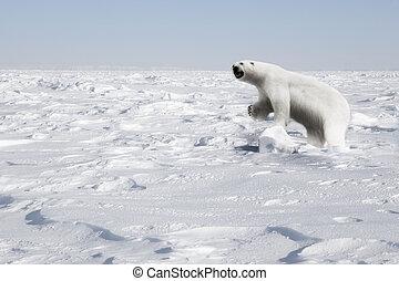 Polar Bear - A polar bear in a natural landscape - Svalbard,...