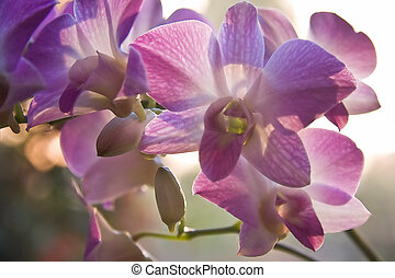 Orchids with aquarel effect - Purple orchids in backlight...