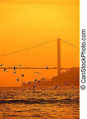 Seagull Silhouette With Bosphorus Bridge Background