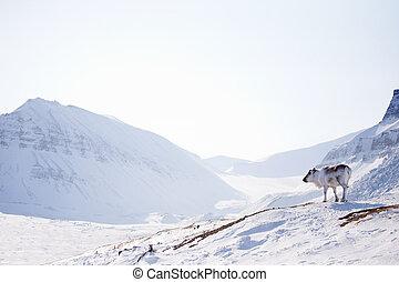 Reindeer on Winter Landscape