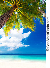 Dream scene Beautiful palm tree over white sand beach Summer...