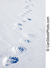 Polar Bear Tracks - Fresh polar bear tracks - Spitsbergen,...