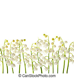 Lily of the valley  flowers isolated border background