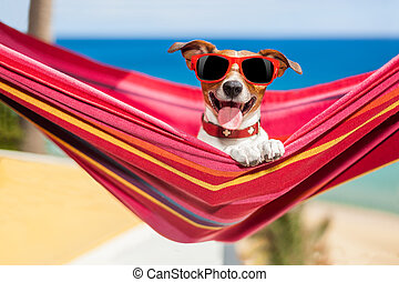 dog on hammock - dog relaxing on a fancy red hammock with...