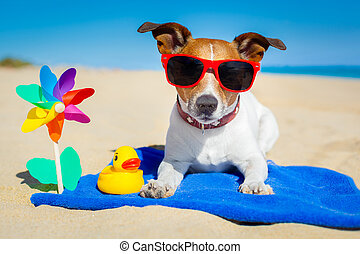 dog at beach - dog plays with sunglasses at the beach on...