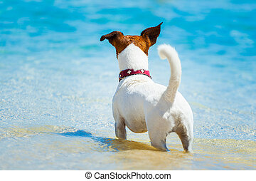 dog watching at the beach into the ocean