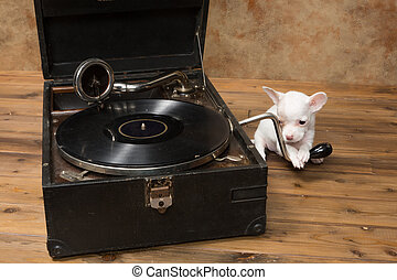 Puppy loves music