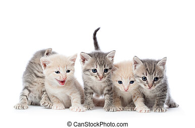 Fife kittens - Group of five kittens Isolated on white...