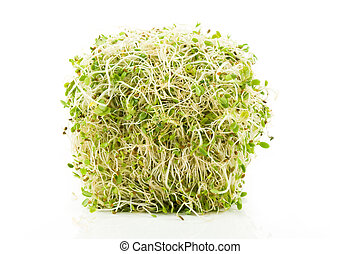 Alfalfa Sprout with white background