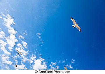Seagull in flight over a deep blue sky and white clouds....