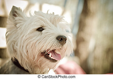 white dog muzzle close up