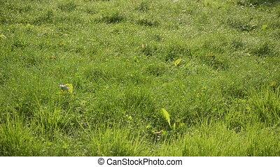 grass dew drop