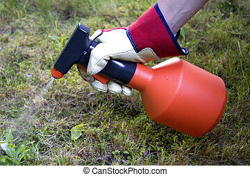 weed spray - Gardener is using weed spray to get a clean...