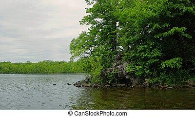 Lake Shore - A natural lake shore in the summer