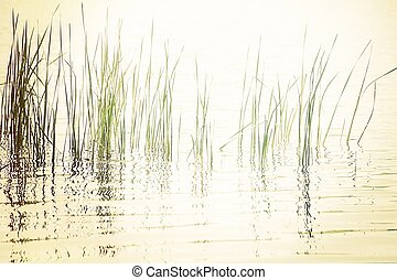 Reeds in Peaceful Lake - Artistic simplicity of peaceful...
