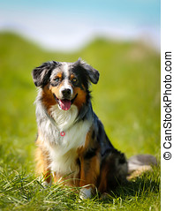 Purebred dog - Shot of purebred dog Taken outside on a sunny...