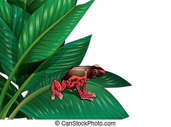 A red frog - Illustration of a red frog on a white...
