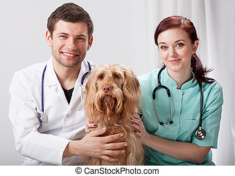 Portrait of dog with two veterinarians - Portrait of dog...