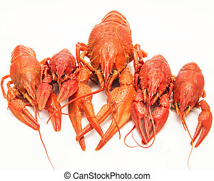 Boiled lobster on a white