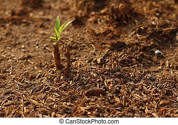 nuevo, vida, verde, Germinación, Plantas de semilla