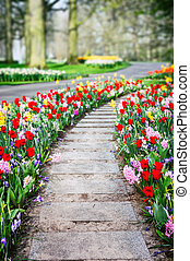 Spring landscape with colorful tulips and hyacinths - Spring...