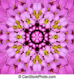 roxo, Concêntrico, flor, centro, Mandala,...
