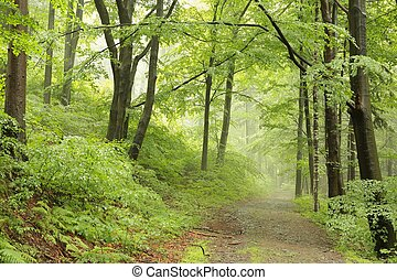 primavera, caduco, bosque