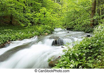 Forest stream surrounded by spring vegetation