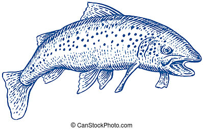 Trout side view etching style - Illustration of a trout side...
