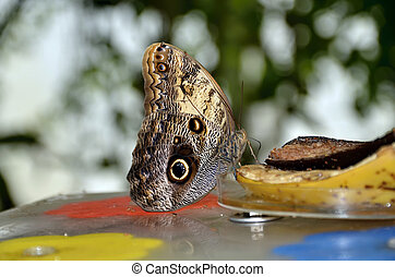 colorful tropical butterfly feeding photo