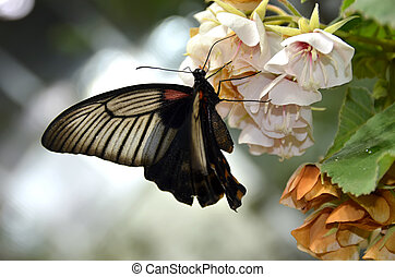 colorful tropical butterfly photo