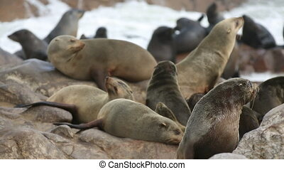 Sea Lions closeup - Closeup of sea lion standing over the...