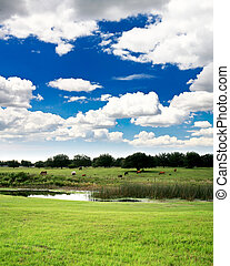 Florida countryside near a golf course