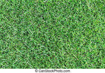 Nature green grass background texture