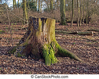 Tree stump at Hinchingbrooke Country Park - The park has...
