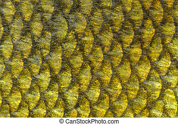 Real Tench Fish Scales Macro - A macro shot of tench fish...