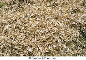 wood shavings - detail closeup of wood shavings