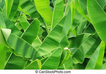 Green fresh banana leaf background