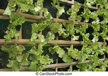 Légumes, organique, jardin,  vertical,  hydroponic