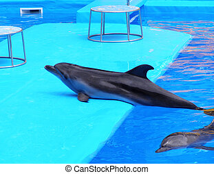 dolphins in the Dolphinarium