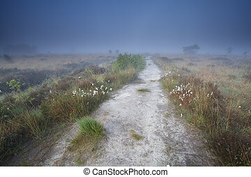 narrow path on swamp in misty morning, Drenthe, Netherlands