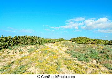 yellow dune