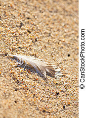 Bird feather in the sand on the beach