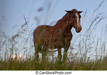 Brown horse - Portrait of a brown horse in the summer meadow